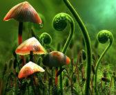 تحميل كتاب عالم النبات